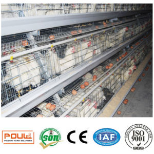The Chicken Cages of Layer From Henan Poul Tech pictures & photos