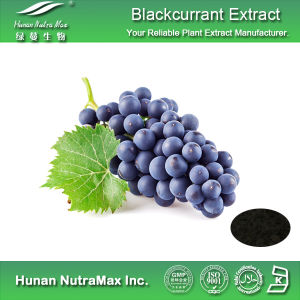 100% Natural Blackcurrant Extract (Anthocyanidin 5%~25%, 4: 1~20: 1)