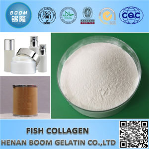 Food / Cosmetic Grade Fish Collagen pictures & photos