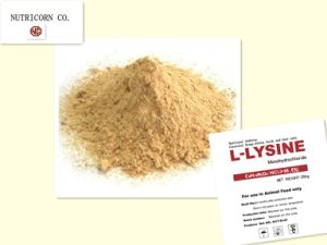 China-Nutricorn-Feed Additive-Lysine HCl 98.5 pictures & photos