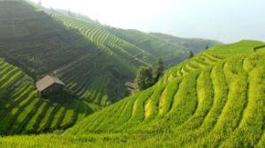 Nitrogen Fertilizer Completely Water Soluble NPK 12-36-12 + Te pictures & photos