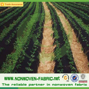 UV Resistant PP Nonwoven Fabric for Agriculture pictures & photos