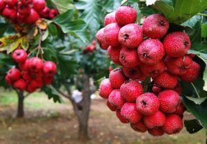 High Content Water Soluble Fertilizer Macronutrients pictures & photos