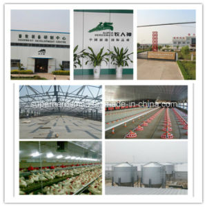 Full Set Automatic Steel Structure Poultry Farm Construction pictures & photos