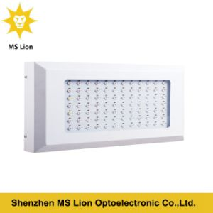 3 Years High Quality Hydroponic Greenhouse LED Grown Light