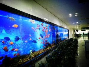 Public Aquarium Display Supplier pictures & photos