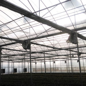 a Venlo Multi-Span PC Board Agricultural Greenhouse pictures & photos