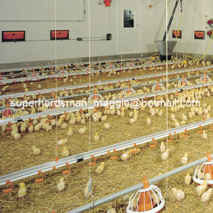High Quality Automatic Poultry Feeding and Drinking System for Chicken pictures & photos