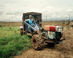 15HP Dongfeng Type Walking Tractor (MX-151) pictures & photos