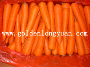 Fresh Carrot Hot Sale From China pictures & photos