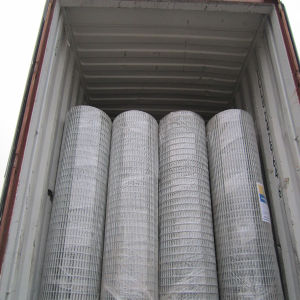 Low Price Galvanized Welded Wire Mesh (export to South Africa) pictures & photos
