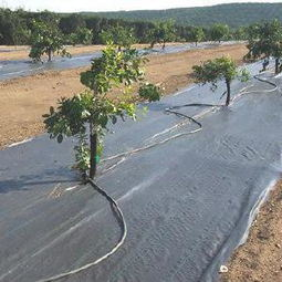 China Manufacturer for Greenhouse Ground Cover pictures & photos