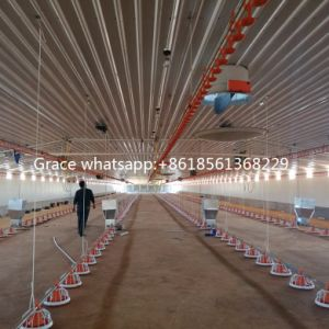 Full Set Automatic Poultry Housing Equipment for Broiler Production pictures & photos