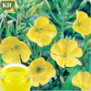 Evening Primrose Oil, Primrose Oil pictures & photos