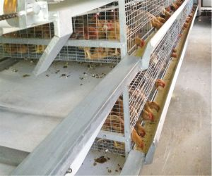 Full Automatic Pullet Battery Cage for Poultry Farm for Sale Pullet Cages System (H Type Frame) pictures & photos