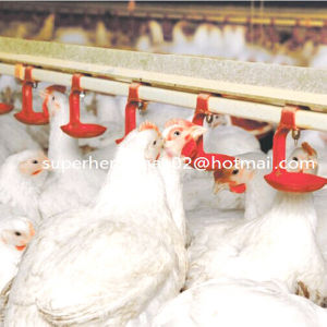 Auto Poultry Drinking System for Chicken Farm pictures & photos