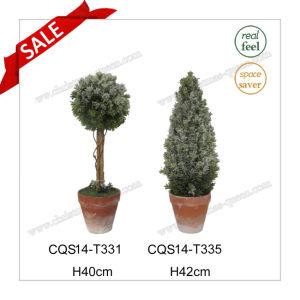 H40cm Plastic Outdoor Decoration Evergreen Grass Artificial Plant pictures & photos