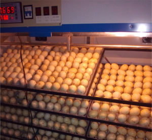 Qualifed Small Incubator Chicken Hatching Machine Bz-4224 pictures & photos