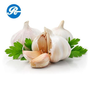 Garlic Extract Allicin for Sterilization pictures & photos