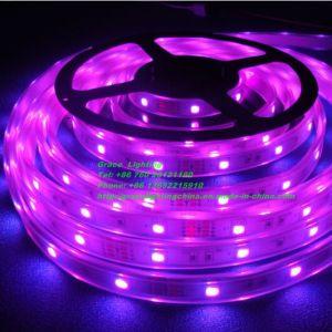 60LEDs/M SMD3528 Pink LED Strip (G-3528-60-12V-PK-34) pictures & photos