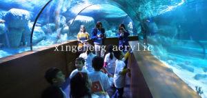 Acrylic Aquarium Tunnel pictures & photos
