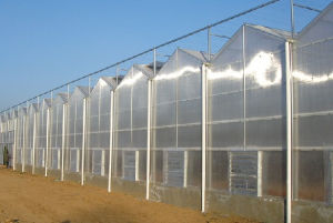 Greenhouses for Vegetables Used Greenhouses for Mushroom Polycarbonate Sheet pictures & photos