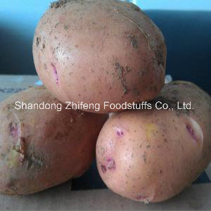 High Quality Exporting Potato pictures & photos