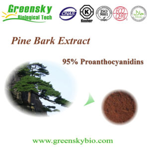 ISO Factory Supply French Pine Bark Extract 50%-95% Proanthocyanidins, 30%-95% Polyphenols pictures & photos