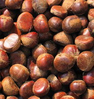 Crop 2014 Fresh Chestnuts China Best Chestnut