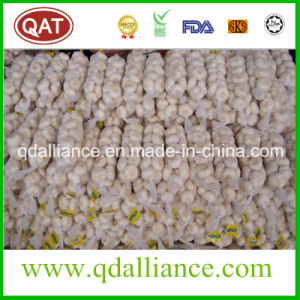 2017 New Crop Normal White Garlic Very Good Price pictures & photos