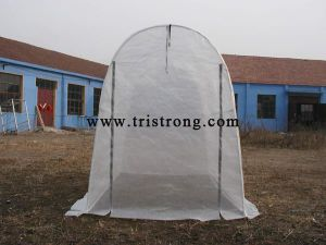 Factory Dierct Sale Garden Shed Hothouse Family Greenhouse (TSU-162G) pictures & photos