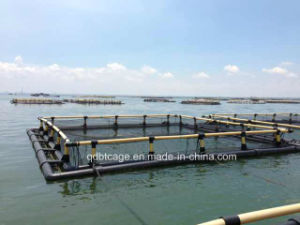 Square Fish Cage (mmexport1377757689332) pictures & photos