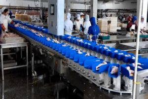 Seafood Chicken Abalone IP69 SUS 304 Sorting Machine pictures & photos