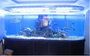 Acrylic Fish Tank pictures & photos
