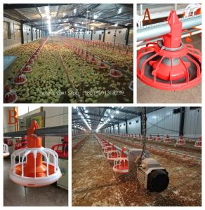 Automatic Broiler Poultry Feeders and Drinkers with for Modern Chicken Farm pictures & photos