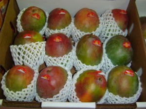 Popular Wholesale Egypt Plastic Protective Expandable Polypropylene Foam Fruit Mesh Net pictures & photos