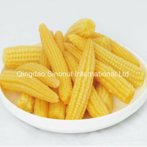 Canned Baby Corn (L size, M Size) pictures & photos