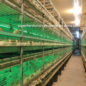 H-Type Chicken Cage Poultry Farm Equipment for Layer Chicken pictures & photos