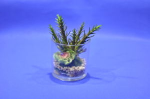 Artificial Plants and Flowers of Mini Plant Succulent Gu-SD0294 pictures & photos