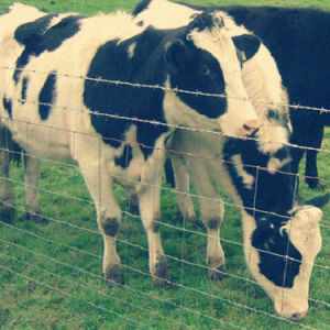 Cattle Fence/Pig Fence /Deer Fence/Field Fence/Fence Price pictures & photos