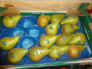 SGS/China/ PP Tray Liners for Pear pictures & photos