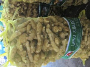 Fresh Ginger From Laiwu pictures & photos
