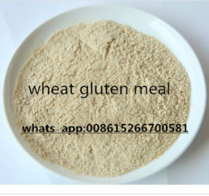 Animal Feed Wheat Gluten Wheat Protein Powder pictures & photos