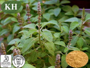 Supply Coleus Forskohlii Extract Forskolin 10%, 20% pictures & photos