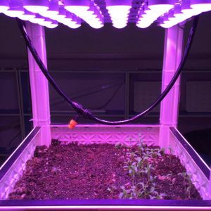 Customized LED Grow Light Module for Leafy Plants pictures & photos