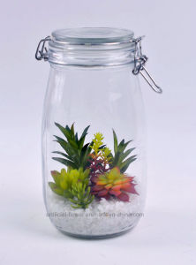 Home Decoration Artificial Succulent Plants in Glass Bottle pictures & photos