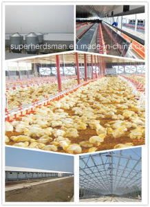 Poultry House/Chicken House with Equipment (SPH-01) pictures & photos