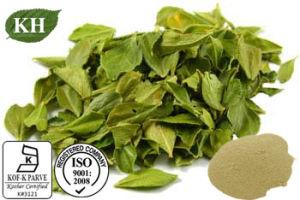 100% Natural Buchu Leaf Powder; 4: 1 Buchu Leaf Extract pictures & photos