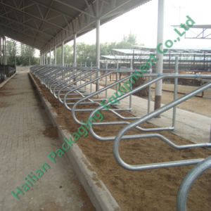 Hot-Dipped Galvanized Single Row Cattle Free Stall pictures & photos