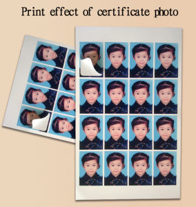 RC Self Adhesive Glossy Photo Paper Use of Certificate Photograph